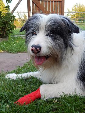 Erste Hilfe für Ihren Hund
